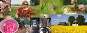 Zielarskie, kosmetyki naturalnej i kulinarne w naszym Siedlisku