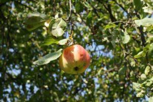 Warsztaty ogrodnictwa naturalnego z elementami permakultury